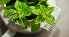 Top 10 Peppermint Oil Remedies, Uses and Benefits