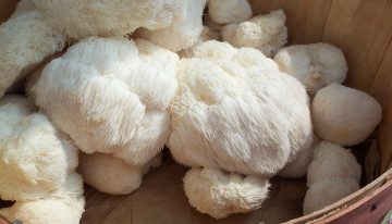 9 Mind and Body Benefits of Lion's Mane Mushroom